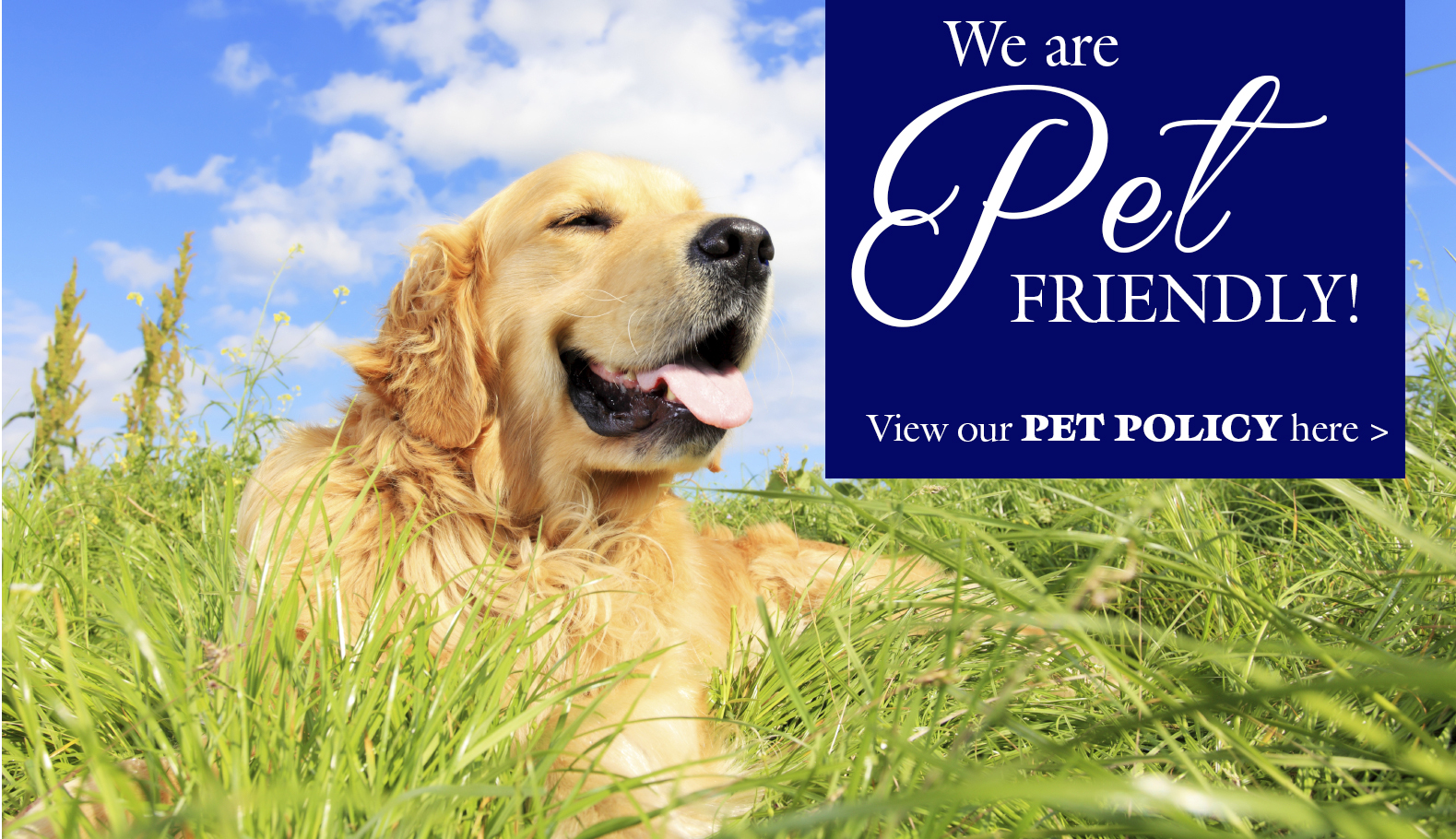 Sunny Brook Cottages is Pet Friendly!
